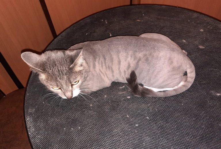 Стрижка кошки Майи