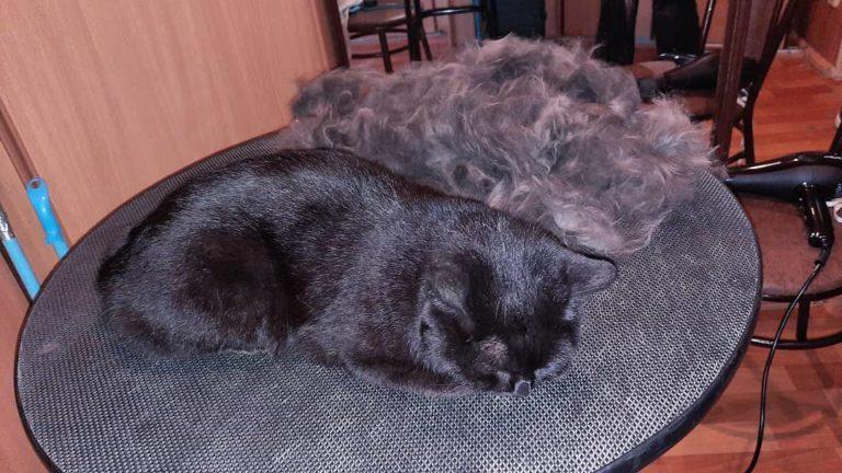 Экспресс линька кошки Маши